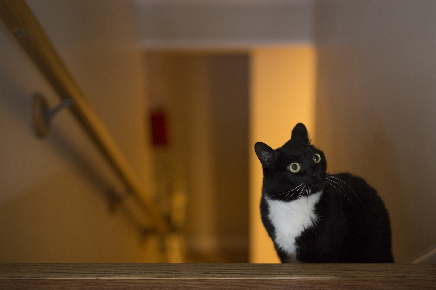 Faith's cat sits inside the house and surveys its surroundings.